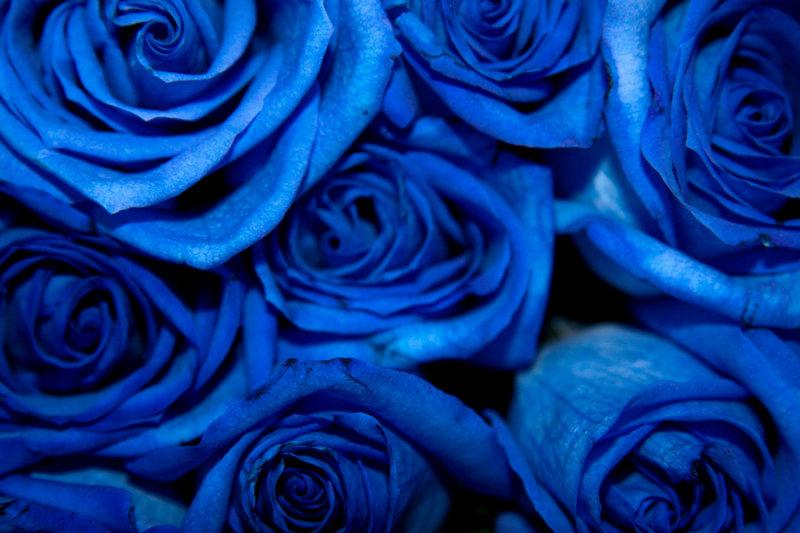 بالصور صور ورد ازرق , جمال الازهار بلون جديد 2471 2