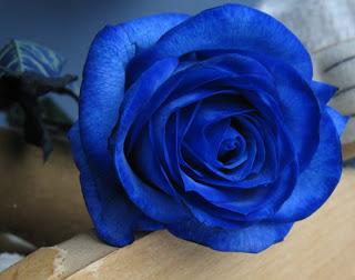 بالصور صور ورد ازرق , جمال الازهار بلون جديد 2471 5