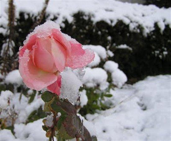 بالصور صور بياض الثلج , الجليد الابيض و جمال الطبيعة القاسية 2592 9