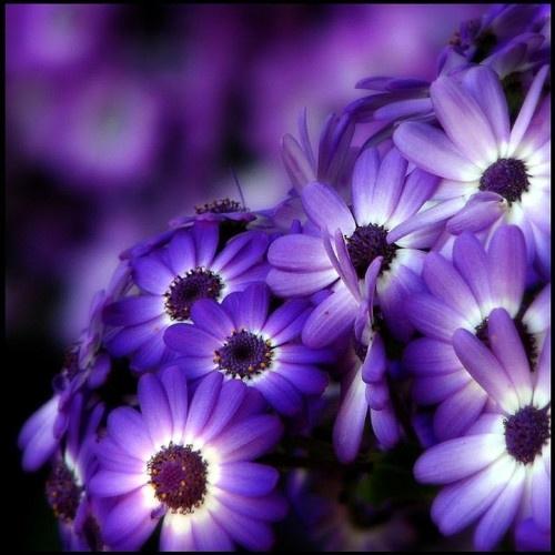 بالصور صور اجمل الورود , ابعت لحبايبك بوكية ازهار يجنن 2660 1