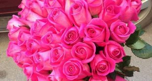صور اجمل الورود , ابعت لحبايبك بوكية ازهار يجنن