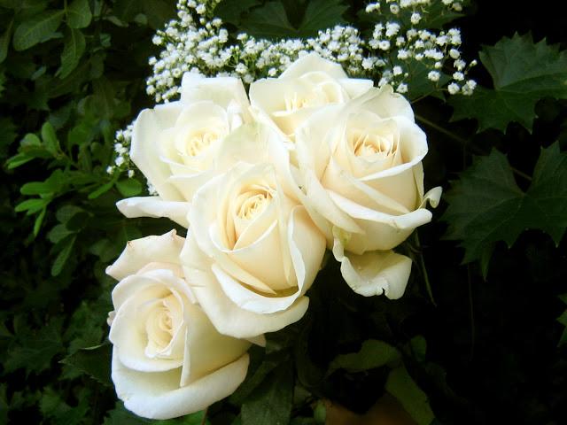 صوره صور اجمل الورود , ابعت لحبايبك بوكية ازهار يجنن