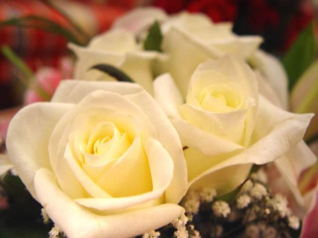بالصور صور اجمل الورود , ابعت لحبايبك بوكية ازهار يجنن 2660 14