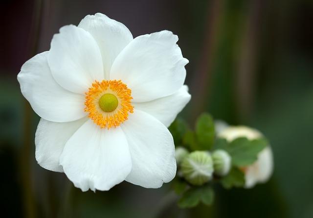 بالصور صور اجمل الورود , ابعت لحبايبك بوكية ازهار يجنن 2660 8