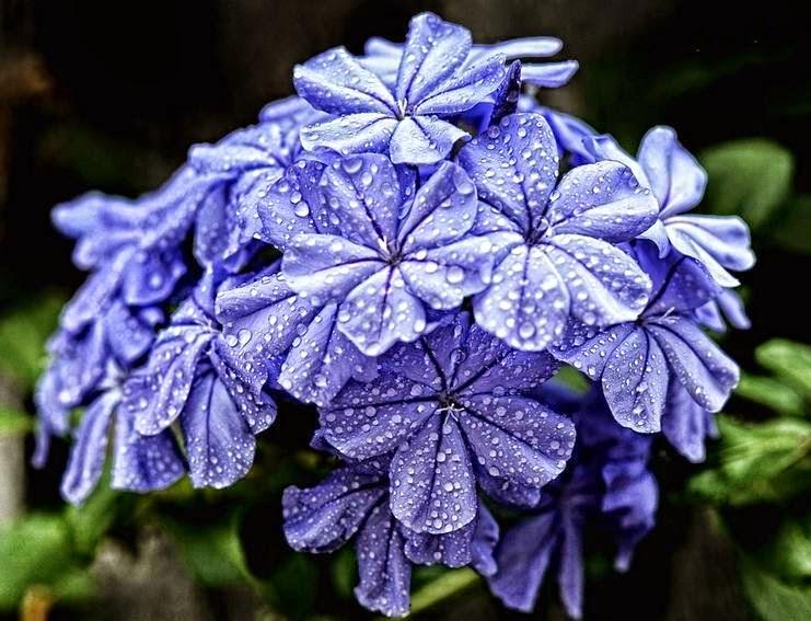 بالصور صور اجمل الورود , ابعت لحبايبك بوكية ازهار يجنن 2660 9