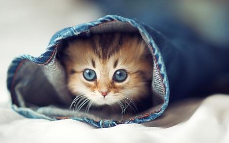 بالصور صور قطط كيوت , مين بيعشق القطاقيط زينا 2667 2