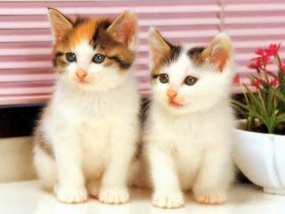 بالصور صور قطط كيوت , مين بيعشق القطاقيط زينا 2667 3