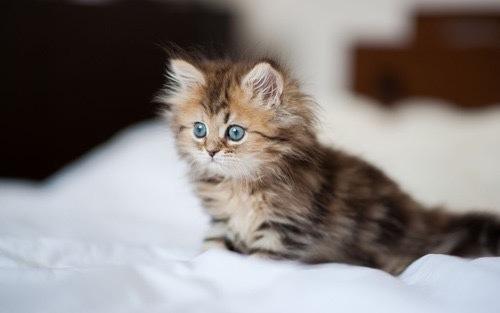 بالصور صور قطط كيوت , مين بيعشق القطاقيط زينا 2667 4