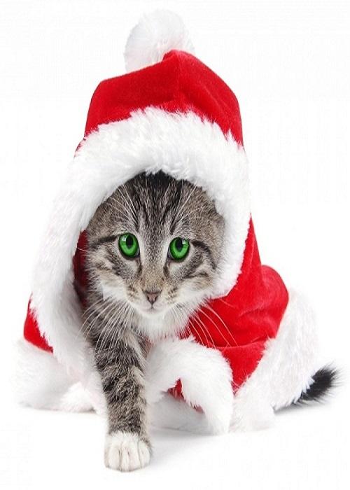 بالصور صور قطط كيوت , مين بيعشق القطاقيط زينا 2667 5