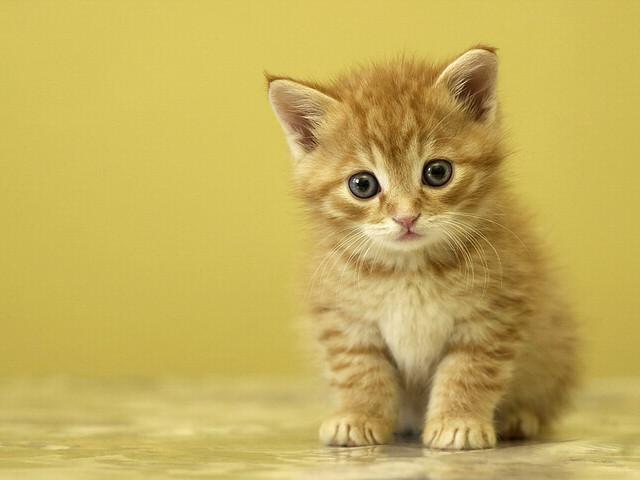 بالصور صور قطط كيوت , مين بيعشق القطاقيط زينا 2667 6