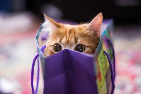 بالصور صور قطط كيوت , مين بيعشق القطاقيط زينا 2667 8