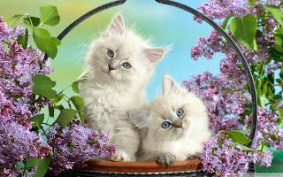 بالصور صور قطط كيوت , مين بيعشق القطاقيط زينا 2667 9