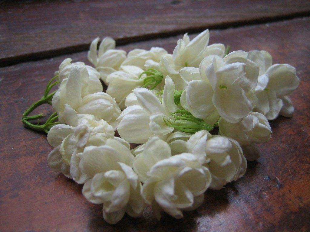 بالصور صور ورد الياسمين , تالقي بعقد من اجمل الزهور البيضاء 2707 4