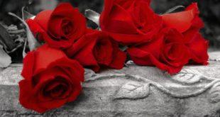 صور صور ورد احمر , بوستات رومانسية للمحبين والمغرمين