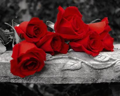 صورة صور ورد احمر , بوستات رومانسية للمحبين والمغرمين