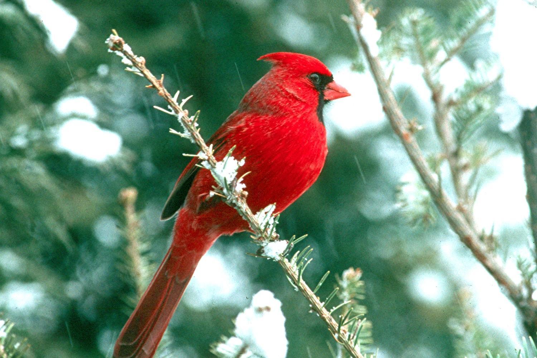 صوره صور طيور جميله , زيني سطح المكتب بخلفيات تجنن