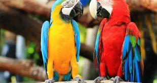صور طيور جميله , زيني سطح المكتب بخلفيات تجنن