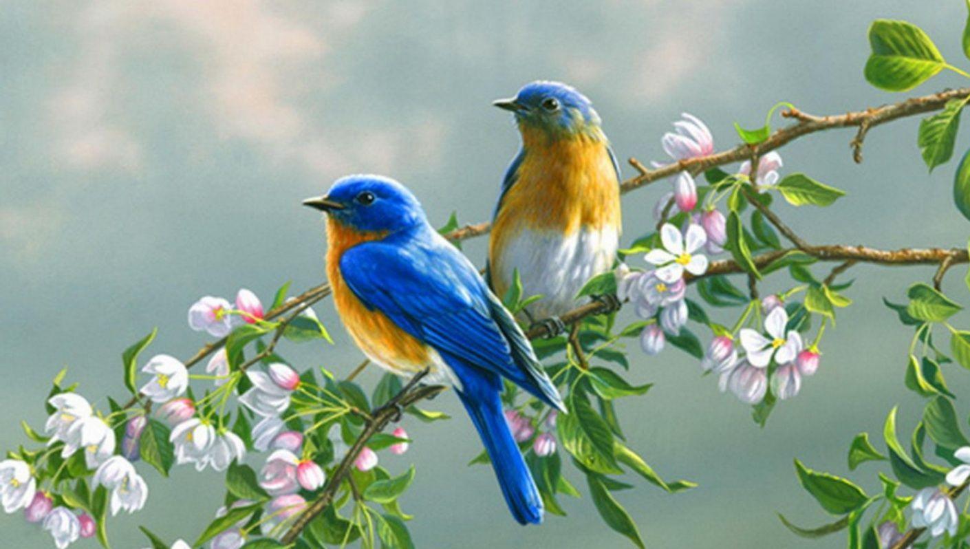بالصور صور طيور جميله , زيني سطح المكتب بخلفيات تجنن 1837 2