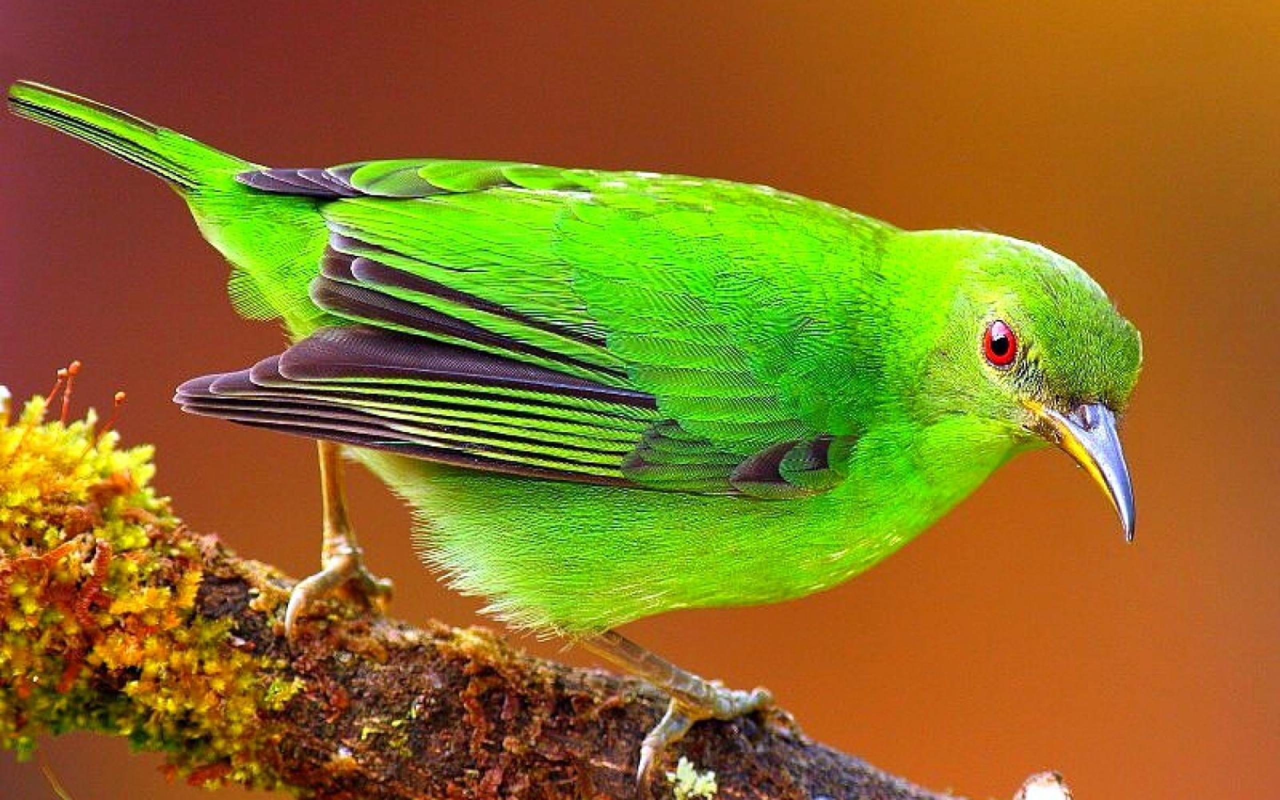بالصور صور طيور جميله , زيني سطح المكتب بخلفيات تجنن 1837 3