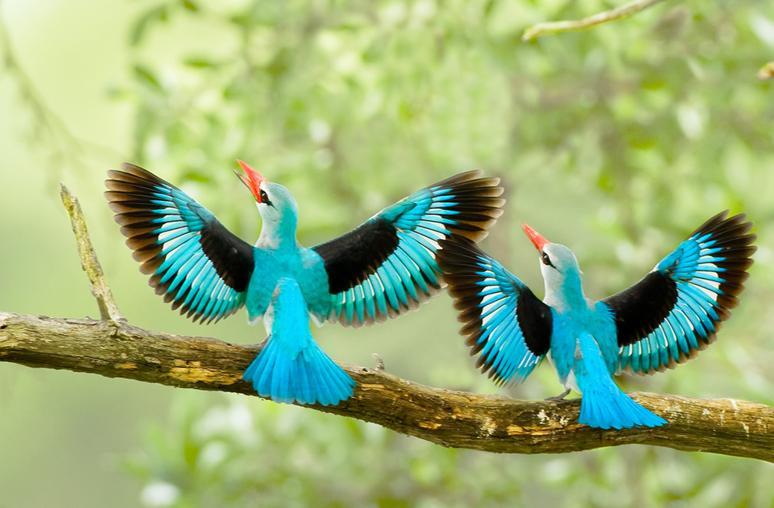 بالصور صور طيور جميله , زيني سطح المكتب بخلفيات تجنن 1837 4
