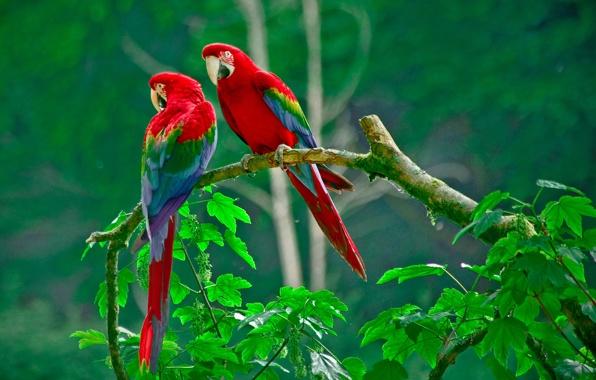 بالصور صور طيور جميله , زيني سطح المكتب بخلفيات تجنن 1837 5