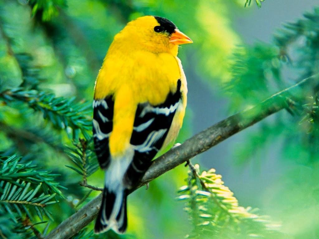 بالصور صور طيور جميله , زيني سطح المكتب بخلفيات تجنن 1837 6