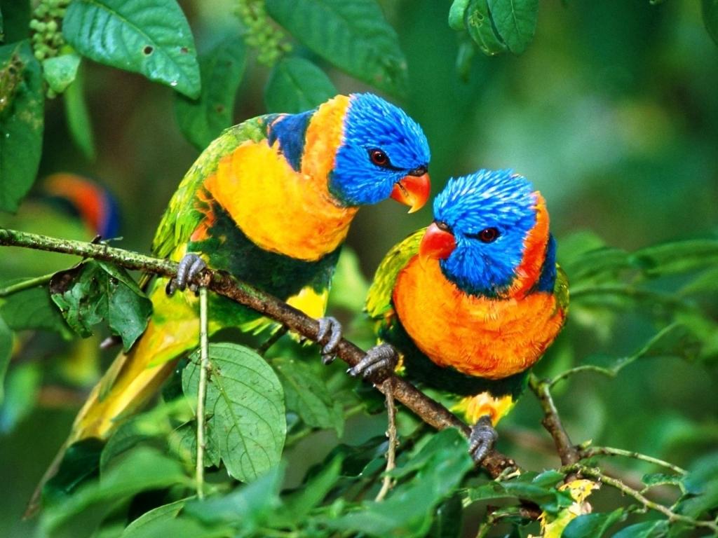 بالصور صور طيور جميله , زيني سطح المكتب بخلفيات تجنن 1837 7