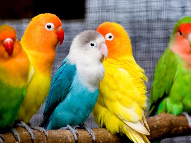 بالصور صور طيور جميله , زيني سطح المكتب بخلفيات تجنن 1837 8