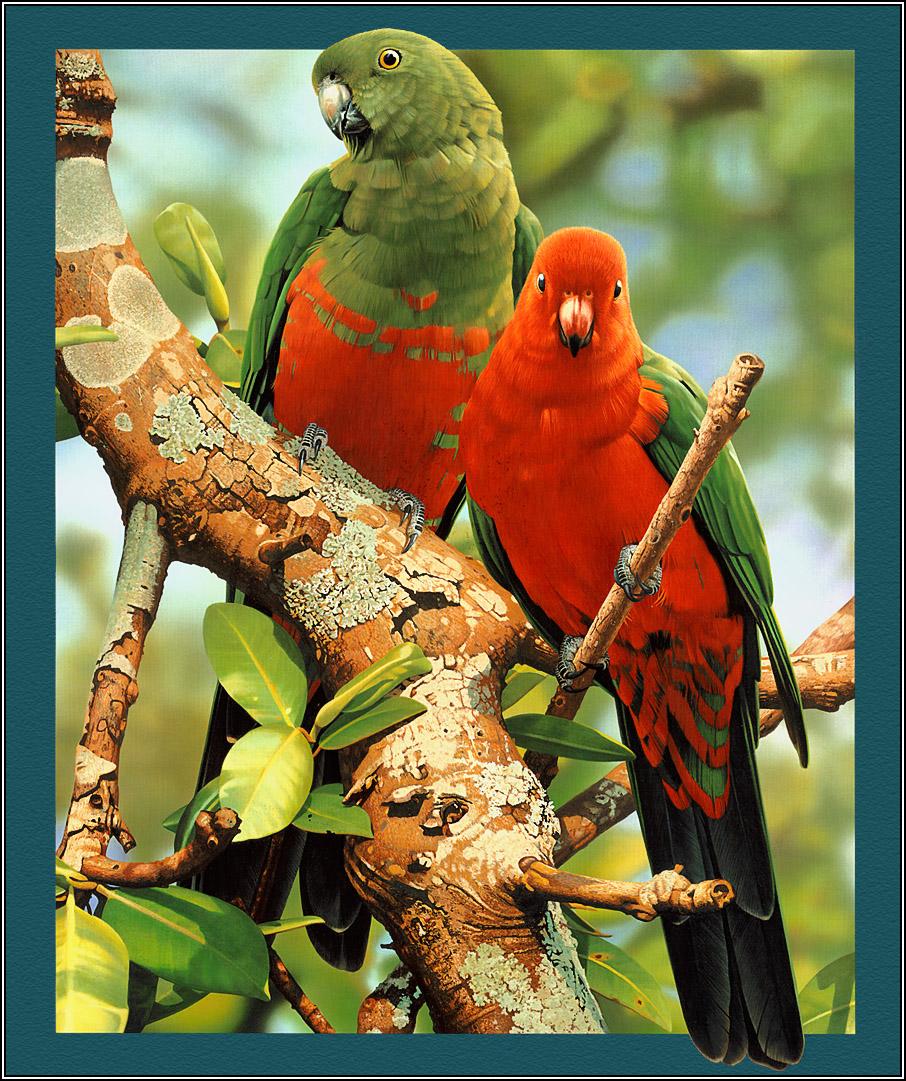 بالصور صور طيور جميله , زيني سطح المكتب بخلفيات تجنن 1837 9