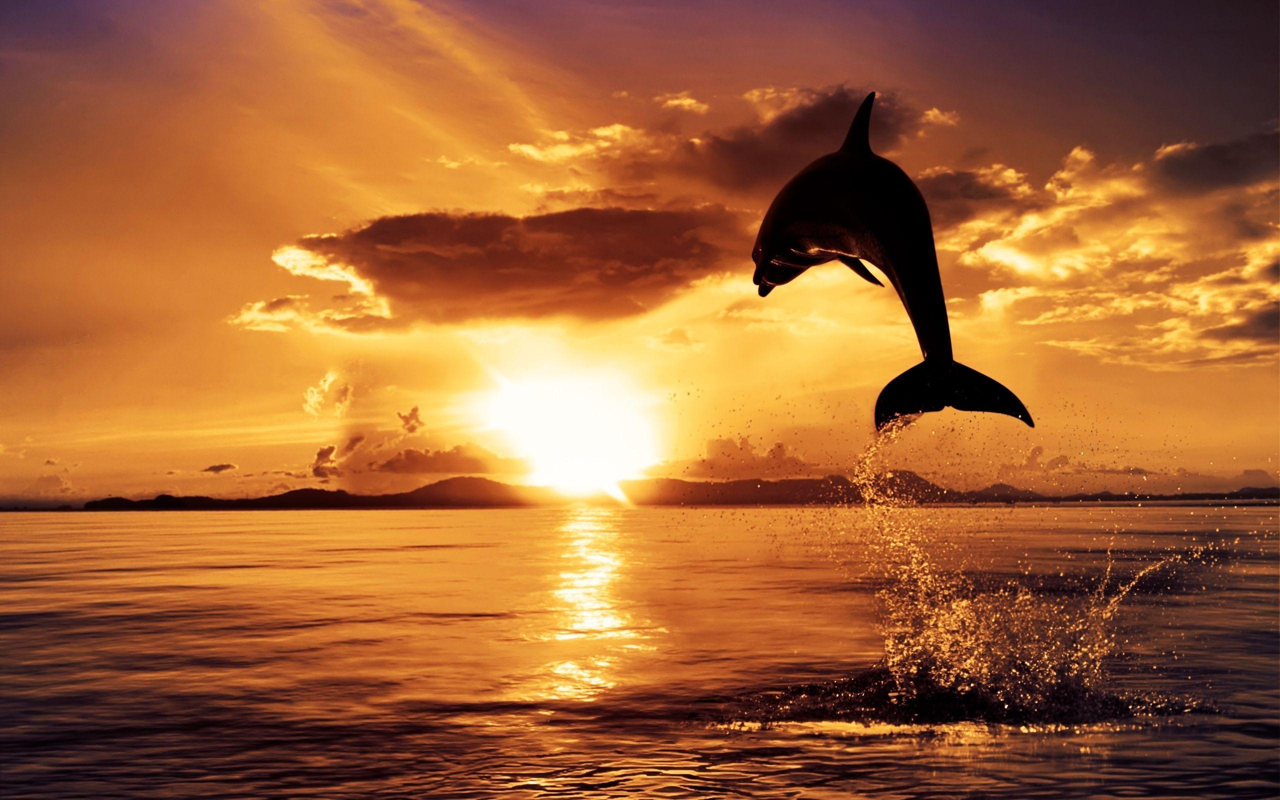 صوره صور غروب الشمس , منظر بدهشك من روعة جمالة