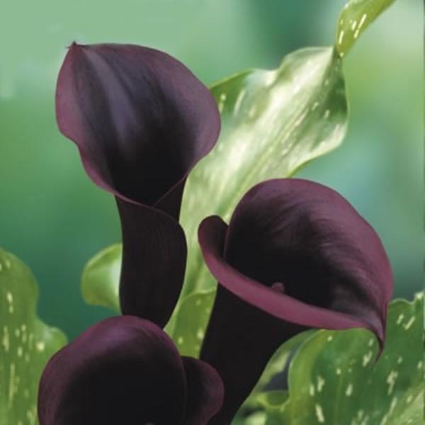 بالصور صور ورد طبيعي , ياجمال الورد وحلاوتة محدش شاف زية 1881 3