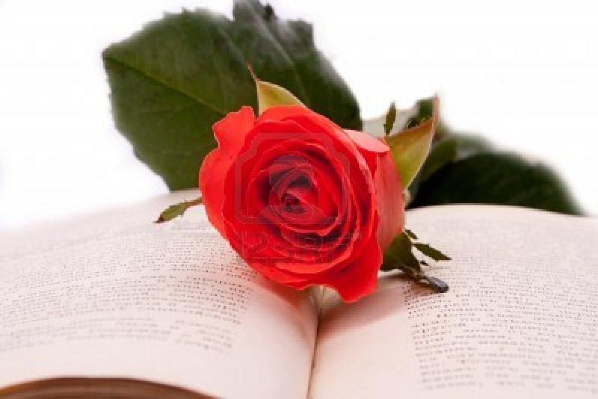 بالصور صور ورد طبيعي , ياجمال الورد وحلاوتة محدش شاف زية 1881 5