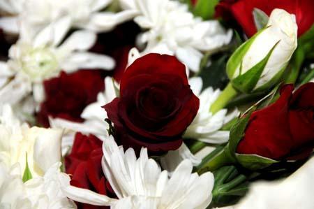 بالصور صور ورد طبيعي , ياجمال الورد وحلاوتة محدش شاف زية 1881 8