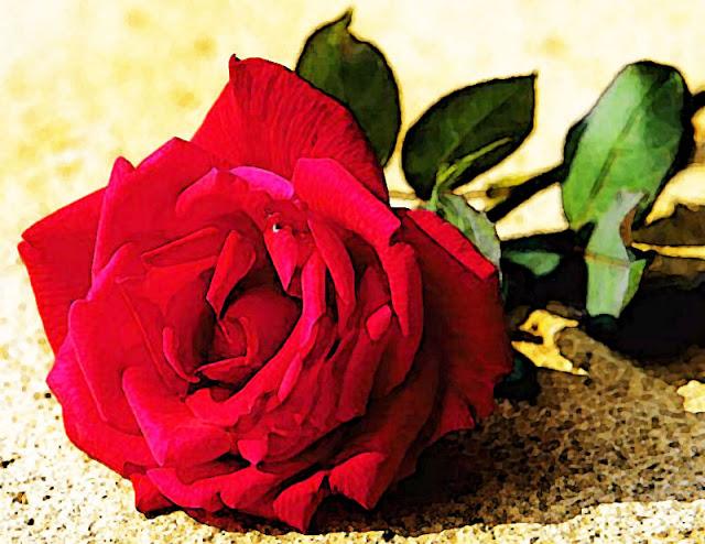 صور صور ورد طبيعي , ياجمال الورد وحلاوتة محدش شاف زية
