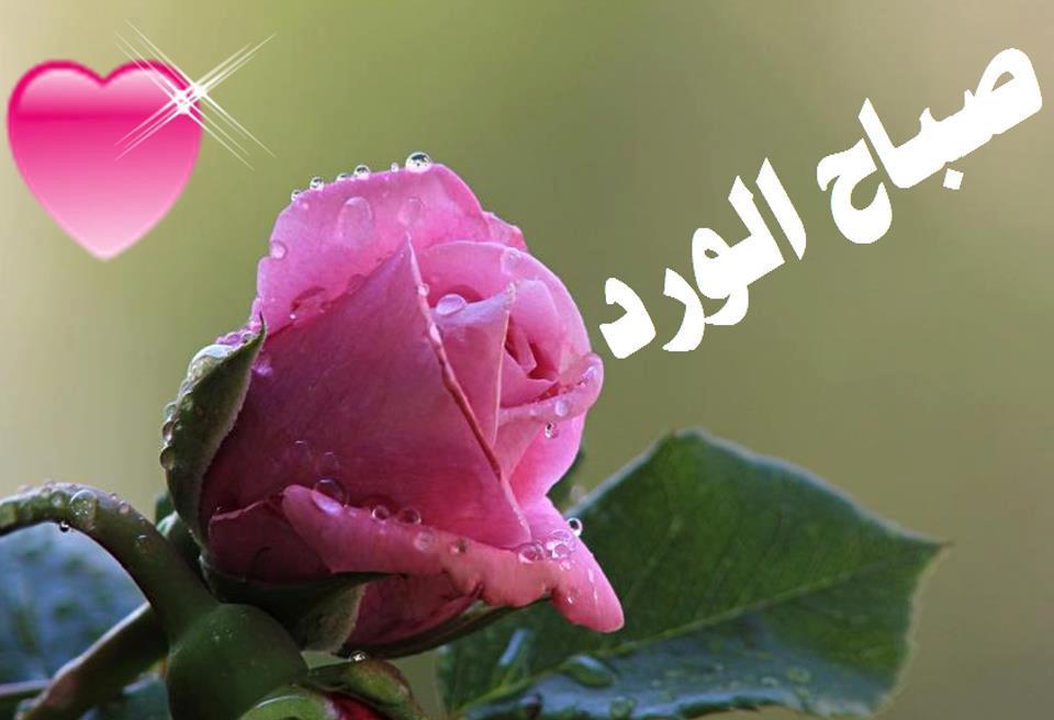 بالصور صور صباح الورد , صبح علي اصحابك بعبير الزهور 1989 5