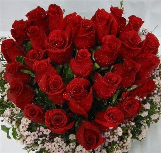 صورة صور ورد جميل جدا , اروع ما شافت عيني من الزهور
