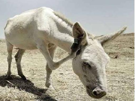 بالصور صور مضحكة جزائرية , حاسب علي قلبك من كتر الضحك 2118 8