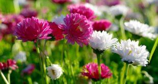 صور صور خلفيات ورد , غيري من شكل موبيلك بالقطات بها عبير الزهور