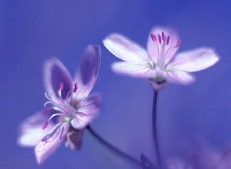 بالصور صور خلفيات ورد , غيري من شكل موبيلك بالقطات بها عبير الزهور 2316 2