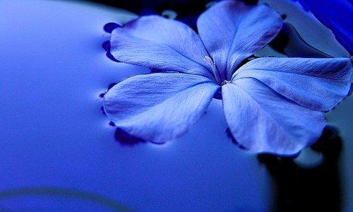 بالصور صور خلفيات ورد , غيري من شكل موبيلك بالقطات بها عبير الزهور 2316 3