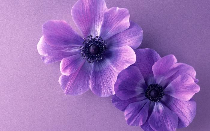 بالصور صور خلفيات ورد , غيري من شكل موبيلك بالقطات بها عبير الزهور 2316 4
