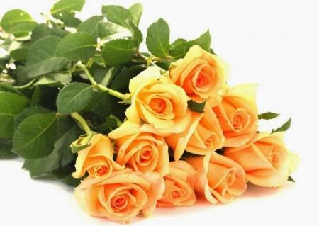 بالصور صور خلفيات ورد , غيري من شكل موبيلك بالقطات بها عبير الزهور 2316 6