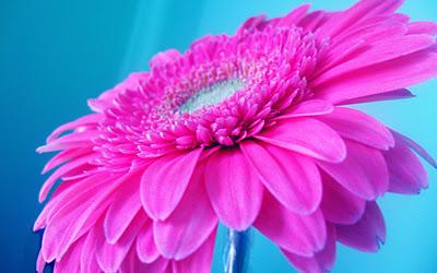 بالصور صور خلفيات ورد , غيري من شكل موبيلك بالقطات بها عبير الزهور 2316 8