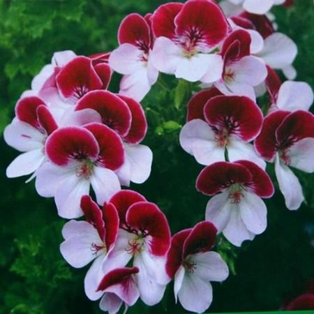 بالصور صور خلفيات ورد , غيري من شكل موبيلك بالقطات بها عبير الزهور 2316 9