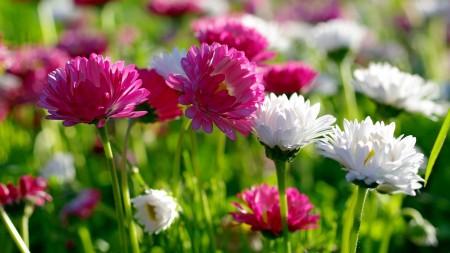 صورة صور خلفيات ورد , غيري من شكل موبيلك بالقطات بها عبير الزهور