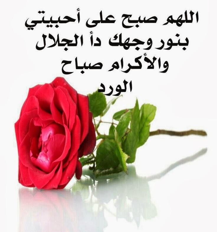 بالصور صور عن الصباح ,  حبيبي صباحك ورد وفل ولوز 2359
