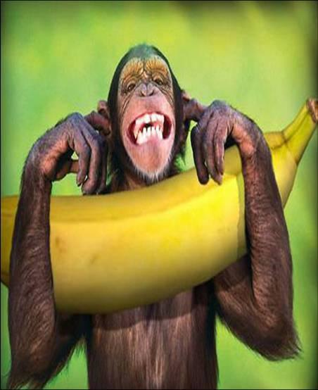 بالصور صور قرود مضحكه , عيش حياتك في الضحك و الفرفشة مع الشمبنزي 2372 1