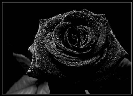 بالصور صوره سوداء , لكل من يمر بحالة من الحزن 1077 9