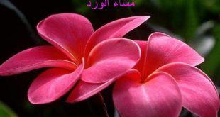 صور عن المساء , مسي علي الحبايب بعطر الورد