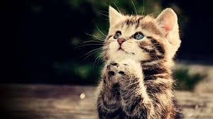 صوره صور قطط جميلة , اجمل الحيوانات